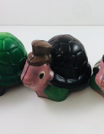 grande tortues assorties